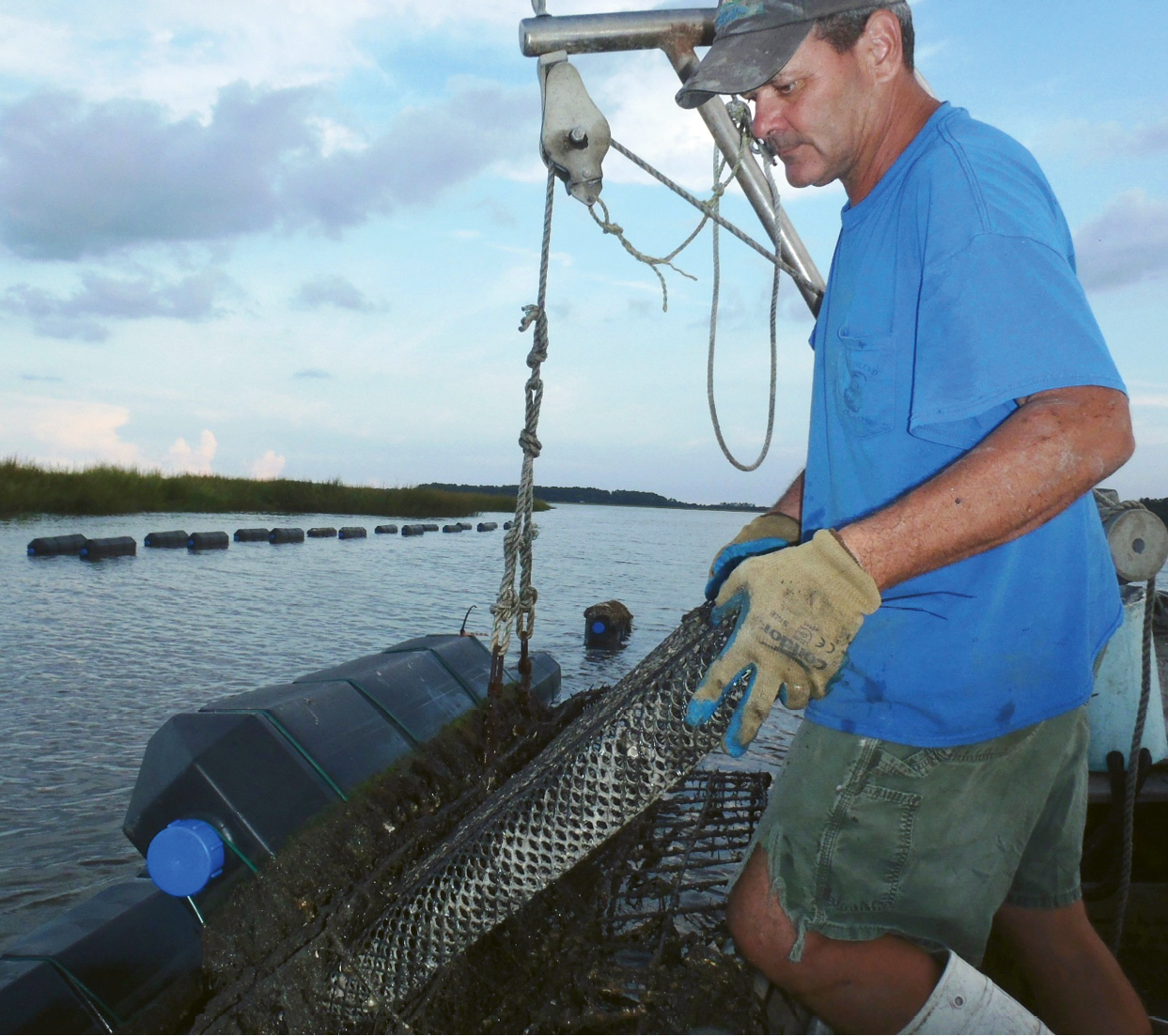 Frank Roberts of Lady's Island Oyster launched South Carolina's first and only oyster hatchery (above left); in addition to growing his own singles in the deliciously high salinity of Beaufort's tidal estuaries, he supplies growers up and down the coast with baby oyster seed.