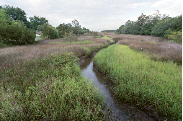 Near the headwaters of Shem Creek