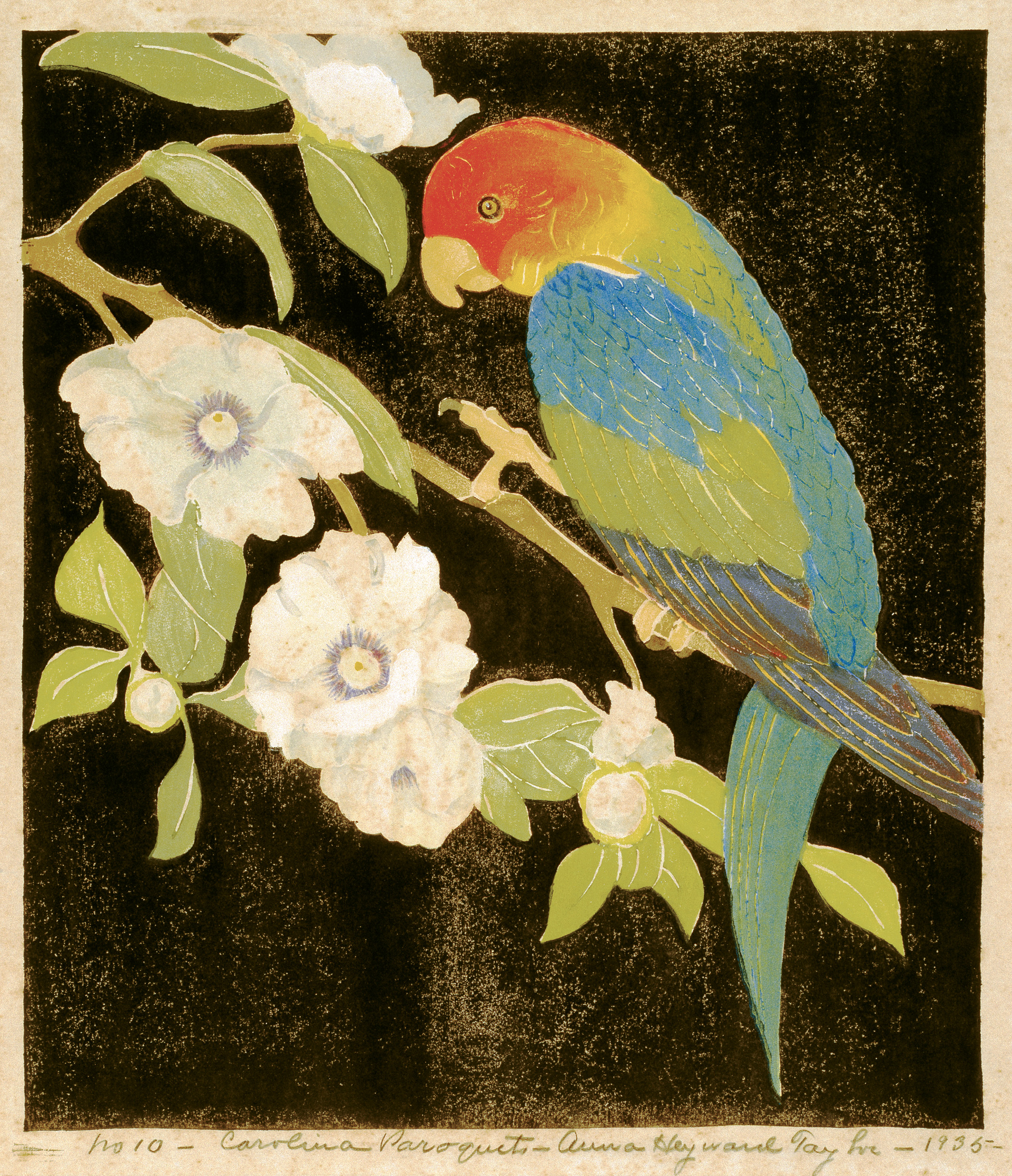 Carolina Paroquet (woodblock print on paper, 1935) by Anna Heyward Taylor