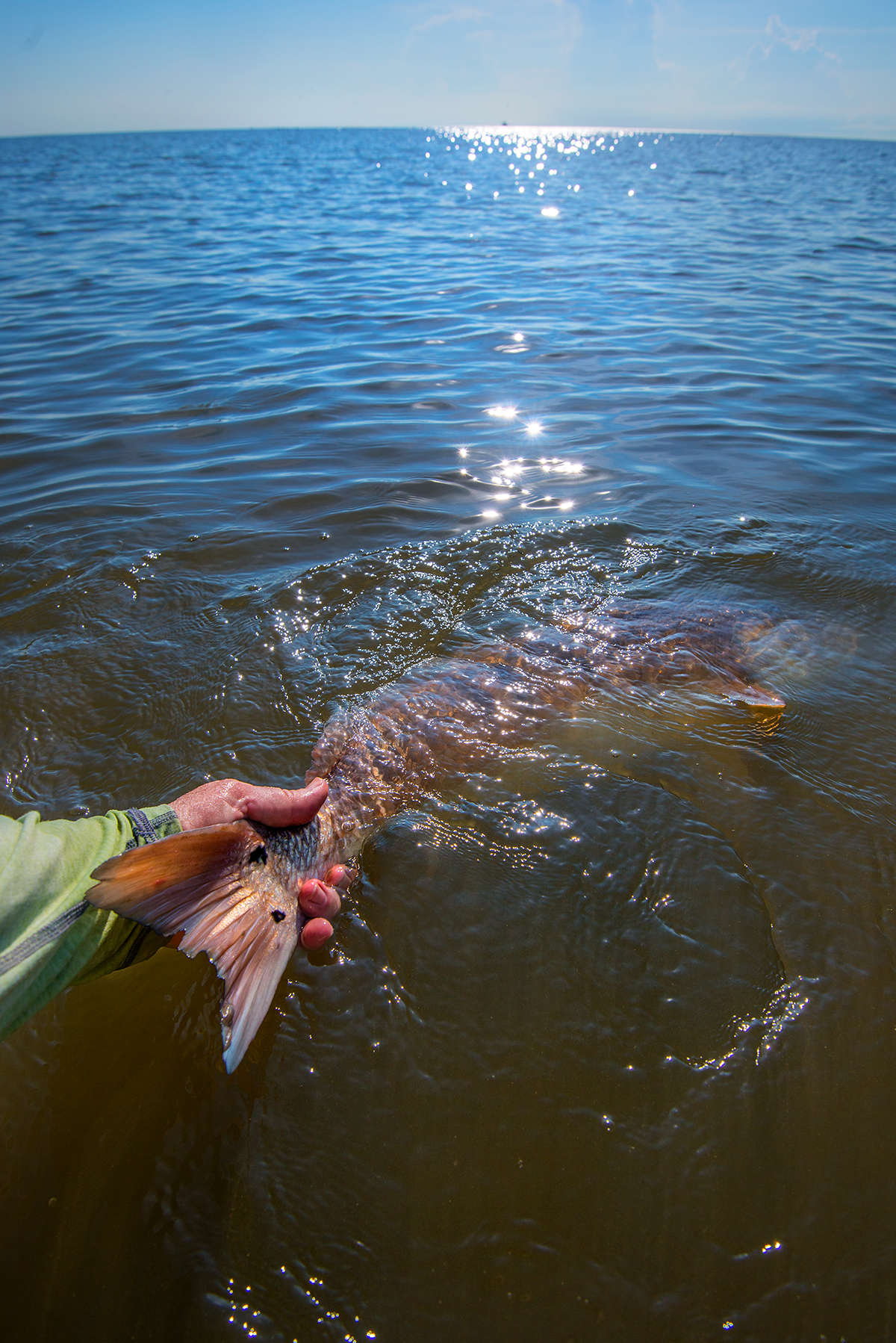 ...handling the fish with care and fully reviving them before releasing back in the water.
