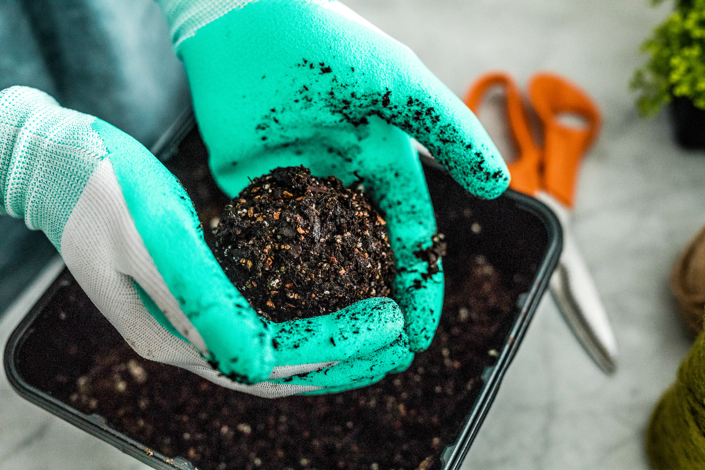 Pour soil into a clean container and add water until soil is damp enough that you can shape it into a sphere about four to eight inches in diameter. (Larger spheres give root systems more room to grow.)
