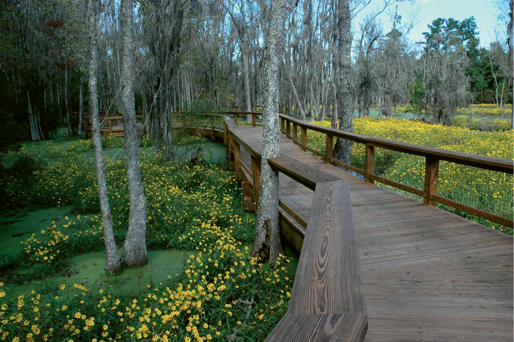 2. Walk or bike the boardwalks through Magnolia Plantation's Audubon Swamp Garden.
