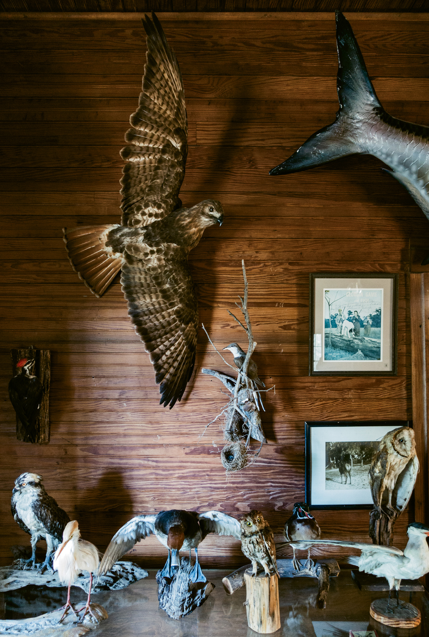 Wild in & out: The lodge walls are lined with mementos from the island's history and past guests, along with stuffed birds and other natural science treasures.
