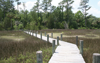 """Lowcountry Trips  - """"On weekends, we take the kids and our Irish wolfhound, Finn, hiking on the marsh trails."""""""
