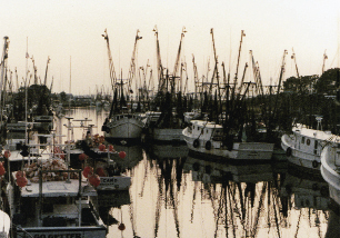 Shrimp boats clustered on Shem Creek.