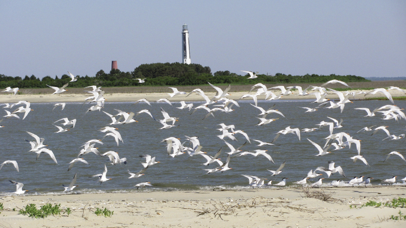 Cape Island is part of the most untamed shoreline on the entire East Coast.