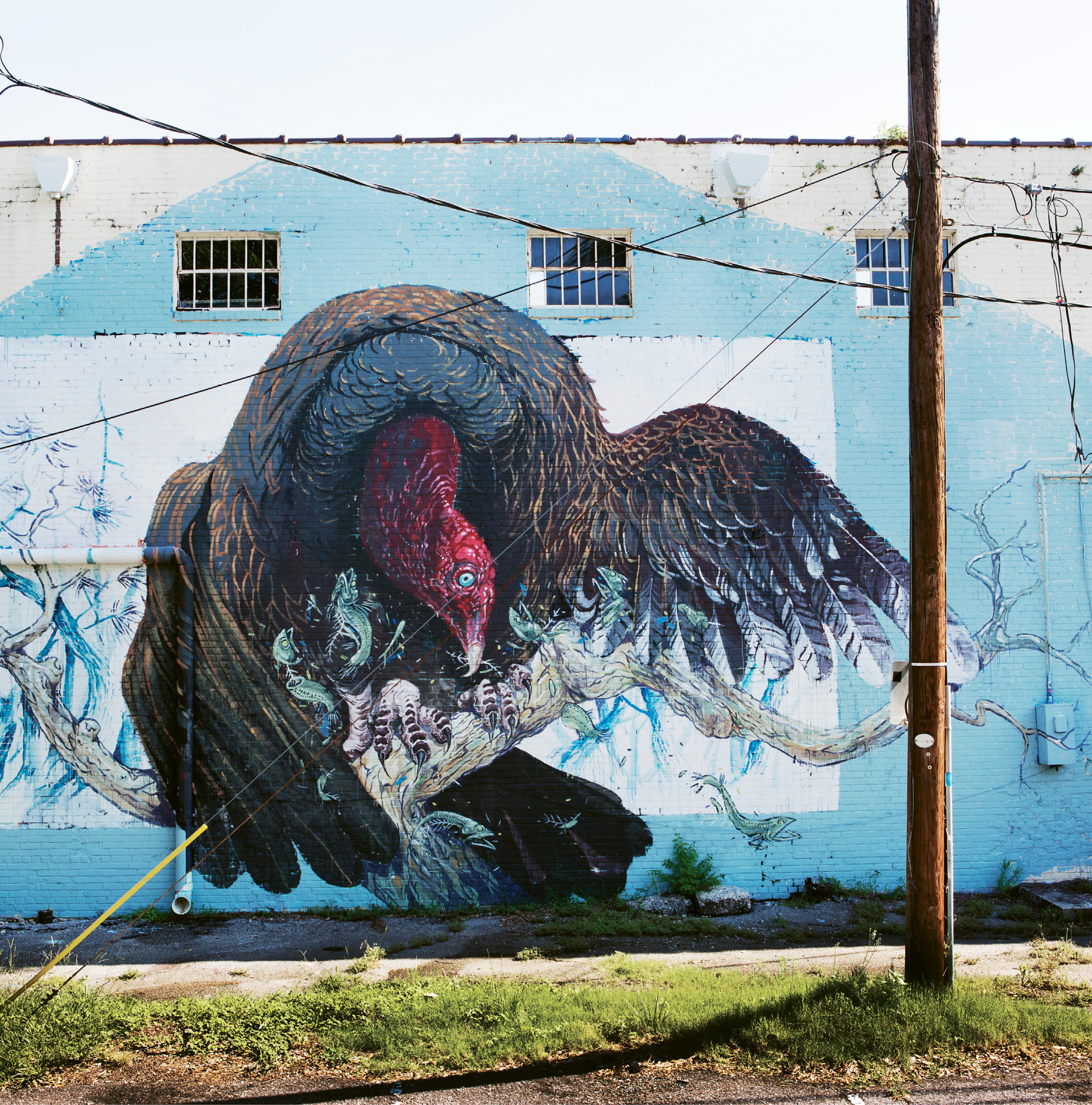 Turkey Vulture by Hitnes  August 2015  on Alycia Alley behind Children's Cancer Society Thrift Store  (835 Savannah Hwy.)  working with ChART (Charleston Art) outdoor initiative & gallery and enough pie, the Italian muralist produced this work during his journey across the U.S. retracing the steps of John J. Audubon.