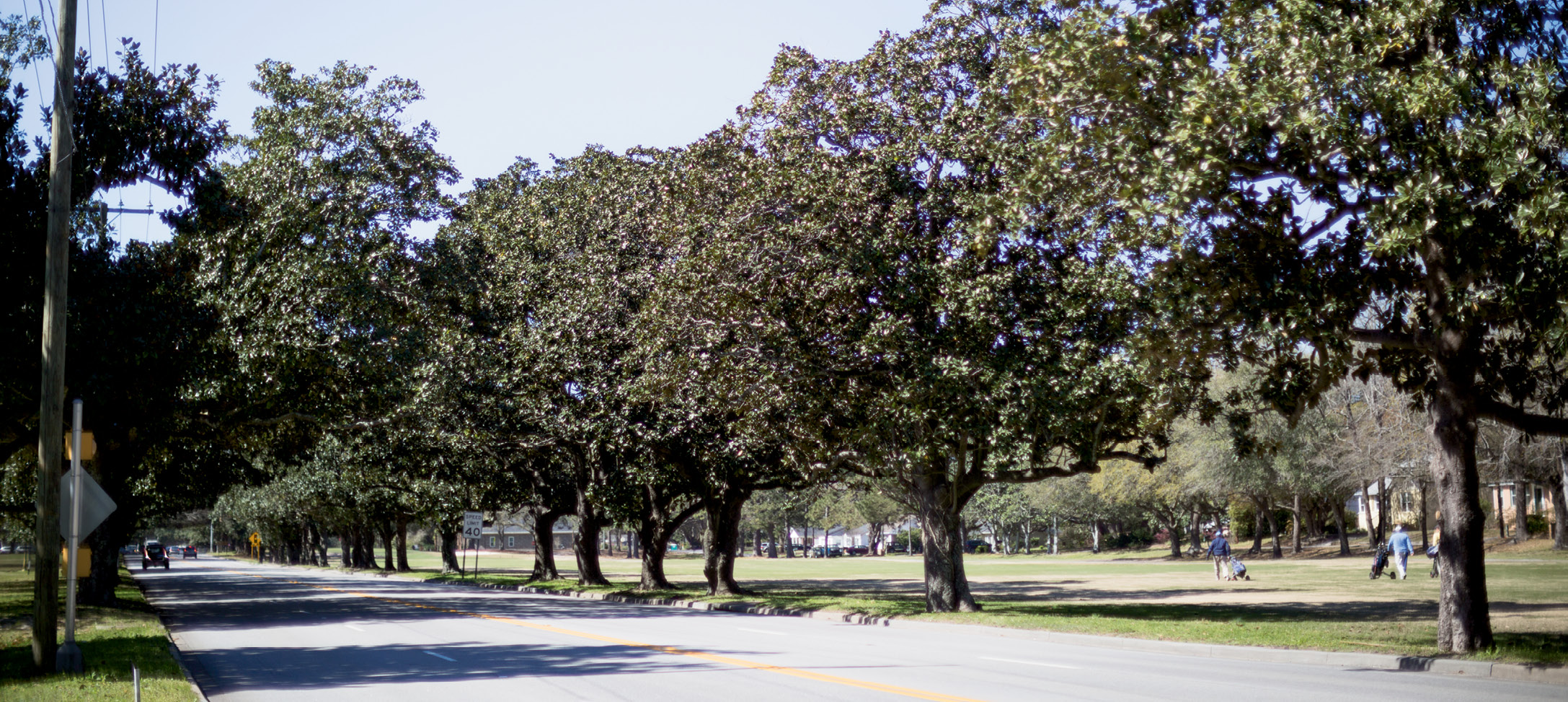"In 1935, Victor had 200 magnolias planted along Maybank Highway ""to assure an avenue of loveliness for all who pass that way."""
