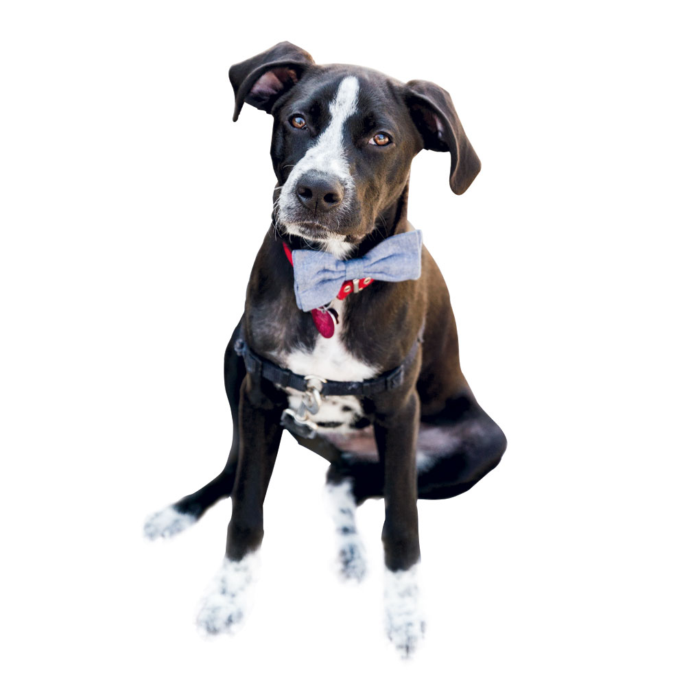 """Top Dog: """"Moose is our six-month-old hound mix. We fostered and then adopted him through Pet Helpers."""""""