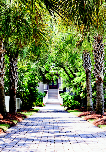 Island Hopping: An avenue of palms sets an  orderly tone for this revamped beach house.