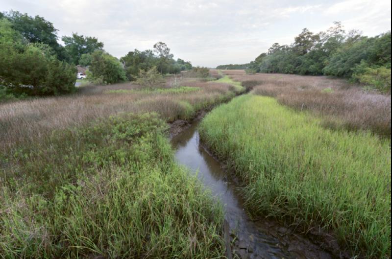 Near the headwaters of Shem Creek