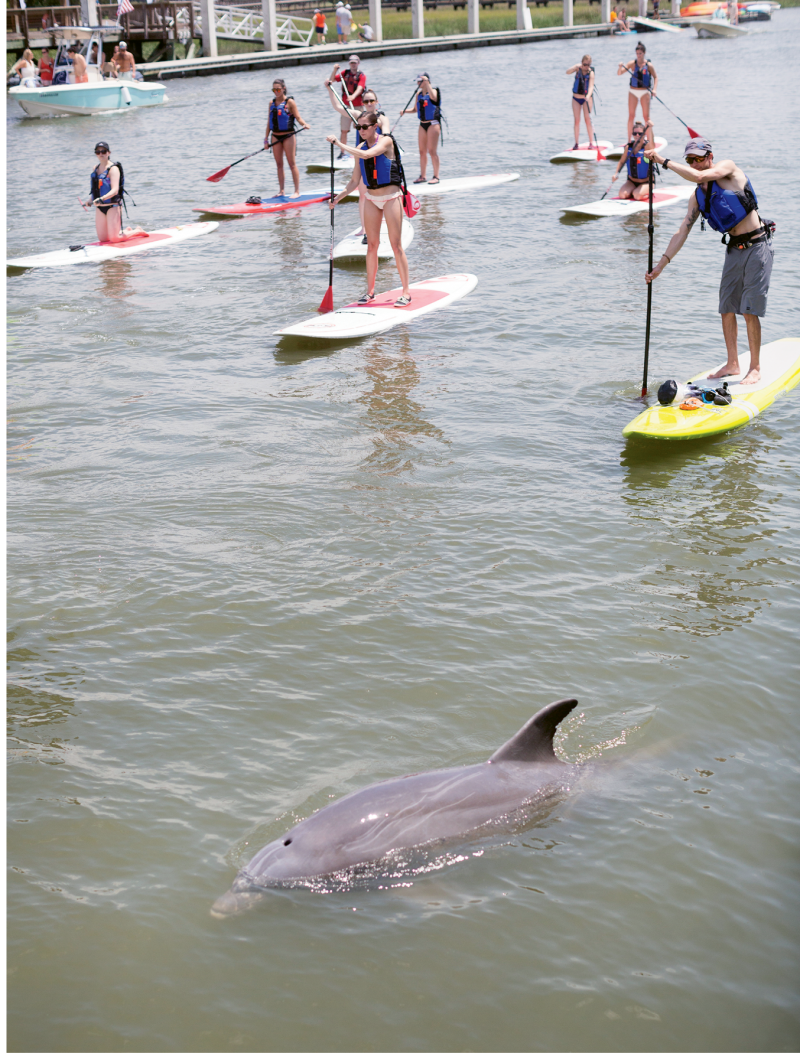 A dolphin joins a group of paddlers.