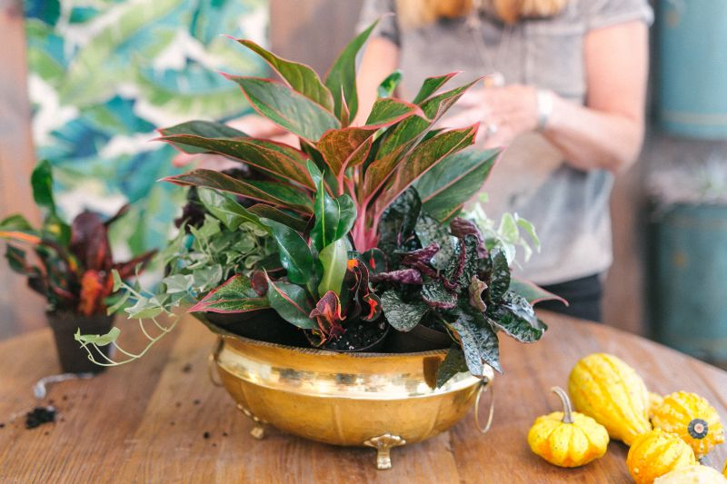 Add smaller plants (such as 'Aloma Ivy', 'Purple Waffle', and 'Mamey Croton' in five-inch pots). Wallace wedged hers in at an angle so that they're at the right height and spill nicely over the edge of the planter.