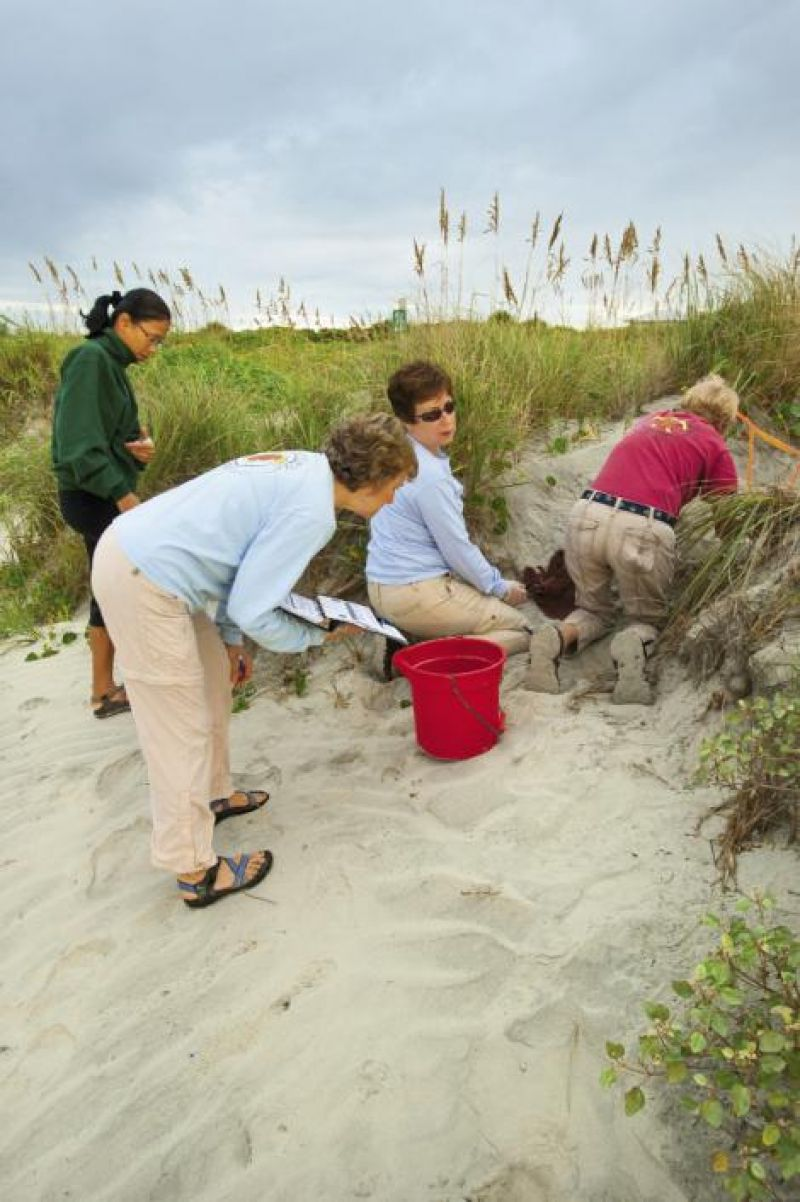 Volunteers count eggs that did not hatch and look for straggler babies.