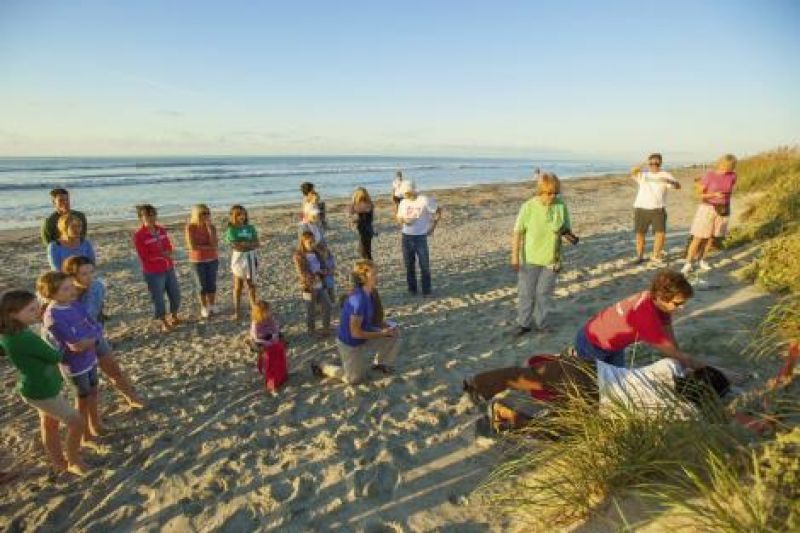 """Onlookers watch an Isle of Palms team inventory a """"boiled"""" (or hatched) nest, looking for stragglers."""