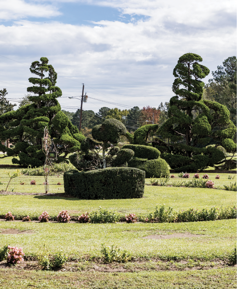 """""""I never set out to make topiary. I'd never even heard the word till years after I started. I just wanted to do something different."""""""