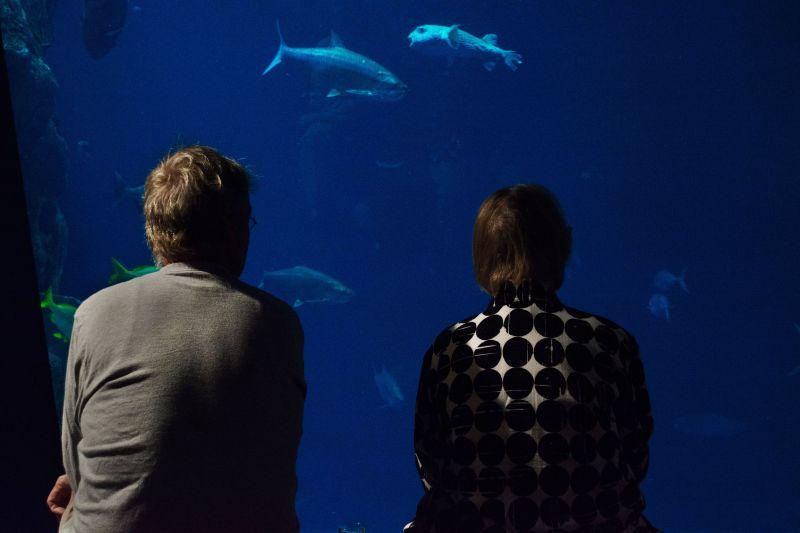 Guests take a break between tastings to take in the marine life.