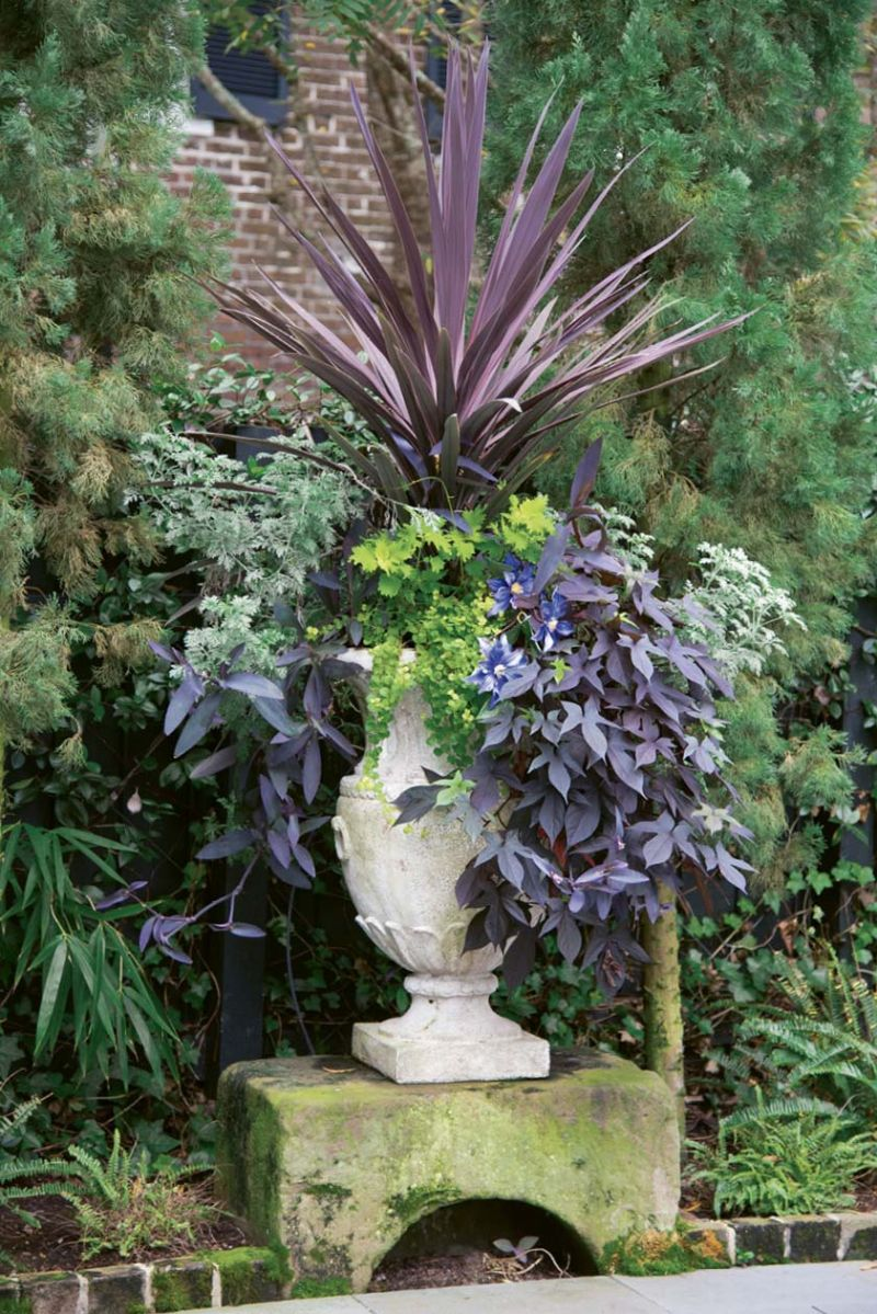 """A Step Up: For a striking focal point, Susan fills an urn with foliage in shades of burgundy, purple, and chartreuse. Last year, she allowed one bloom—that of purple passionflower—to sneak into the planter, which is displayed on a centuries-old carriage step (or """"upping stone"""") they found buried by weeds."""